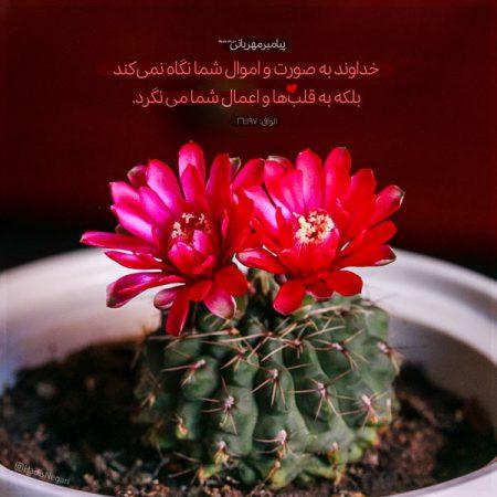 احادیث جالب درباره ظاهر و باطن گل